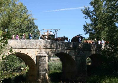 carro mulas puente canto